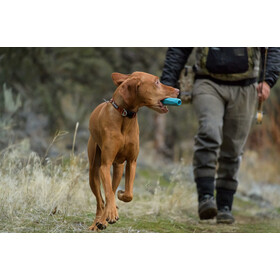 Ruffwear Hoopie Article pour animaux, brook trout